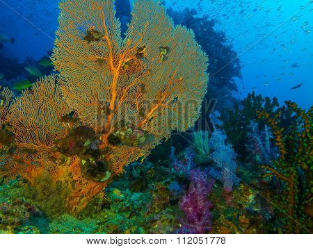 Seafan Coral Reef And Fish