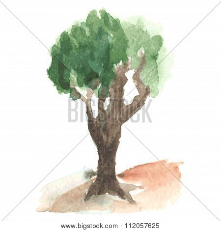 Old watercolor tree with green airy foliage on clumsy brown branched trunk