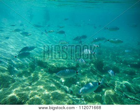 Sardinia Underwater Life