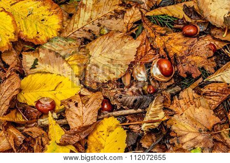 Chesnuts And Leaves