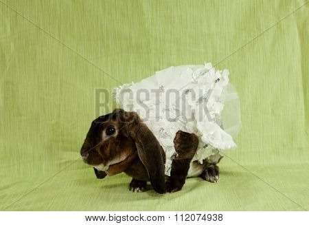 Dressed Rabbit
