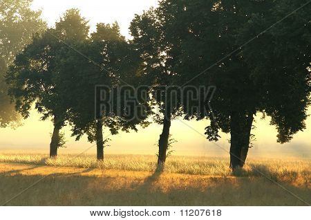 Rural landscape at dawn