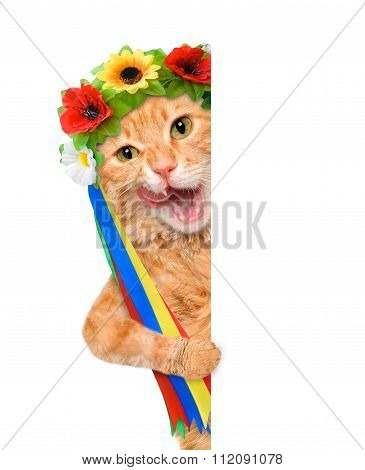 Cat in the traditional costume of a white banner.