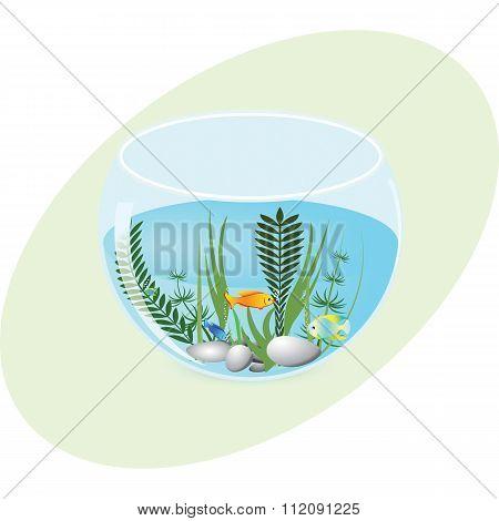 Aquarium with fish and plants
