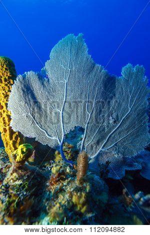 Coral Reef Near Cayo Largo, Cuba