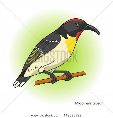 Myzomela taveuni bird educational game vector