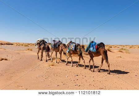 Caravan Going Through The Desert