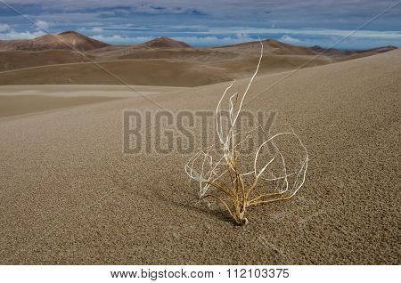 Withered In The Desert Color