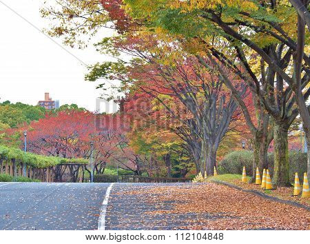 colorful tree on the walk way in Autumn