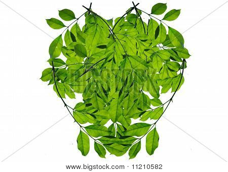 Green leaf love heart frame isolated