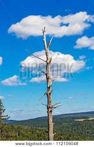dead tree with cloud