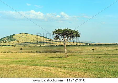 Tree In The Savannah Masai Mara