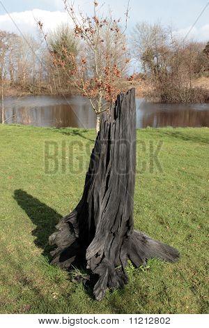 Solid Black Bog Oak