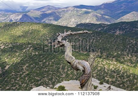 Dried Pine Trunk In The Crimean Mountains