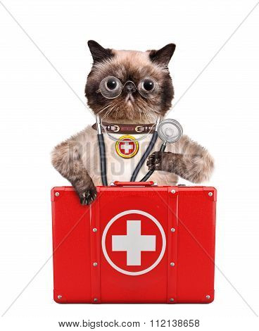 Cat with a first aid kit