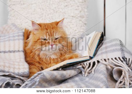 Red cat with books on sofa inside