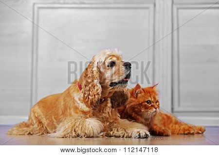 American cocker spaniel and red cat together on floor in room