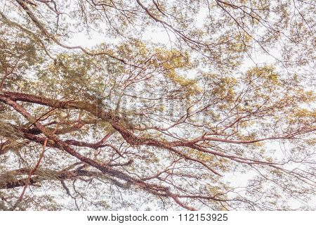 Tree Branch On A Big Tree, Nature Background,vintage Toning
