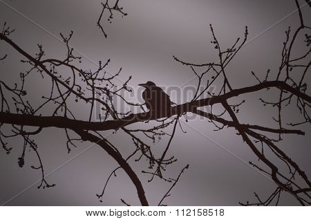 Raven On A Branch At Night