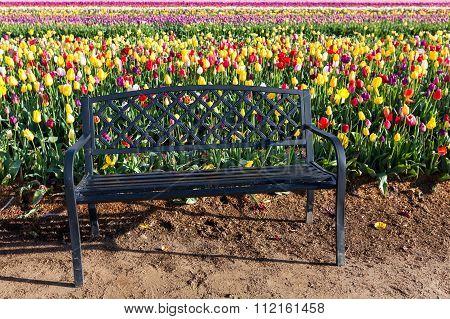 Tulip Farm Bench