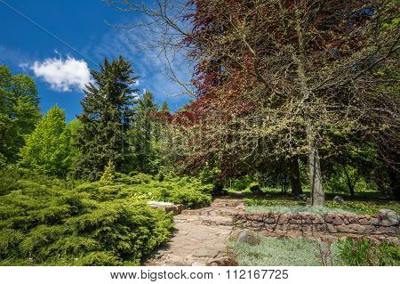 Green Trees And Bushes In Spring Garden. Landscaping