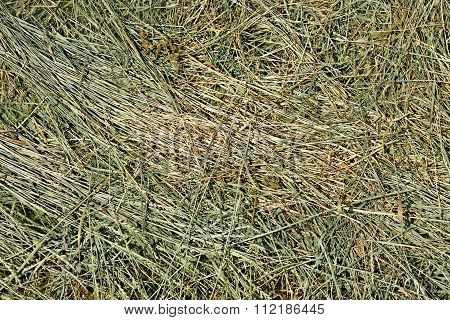 Hay With Cereals And Other Wild Herbs