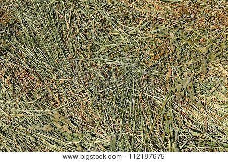 Hay With Cereal And Other Wild Grasses