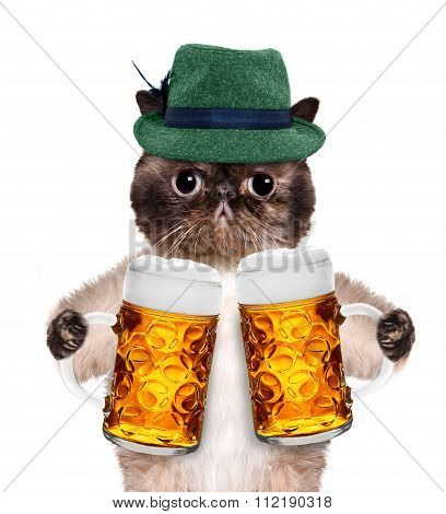 Cat with a beer mug