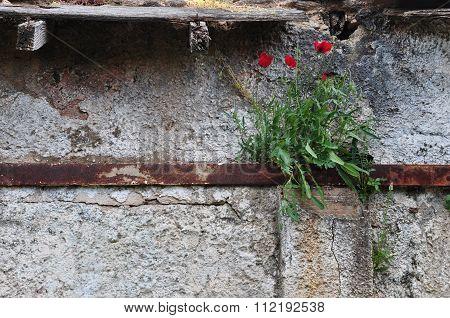 Flowers Rusty Wall