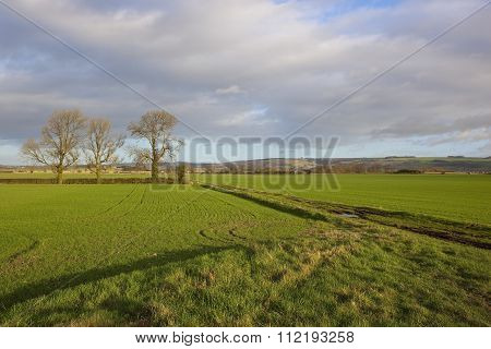 Green Wheat Fields In Winter