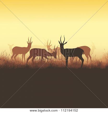 Vector Illustration Of Wild Horned Animals.