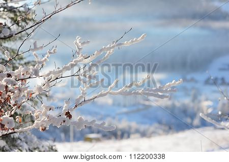 Twig in the snow