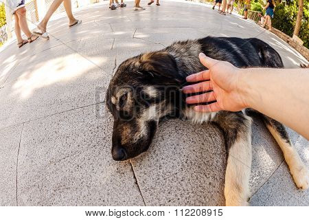 stray dog helping