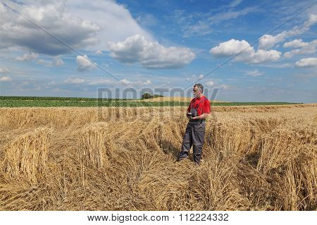 Farmer Or Agronomist Inspect Damaged Wheat Field