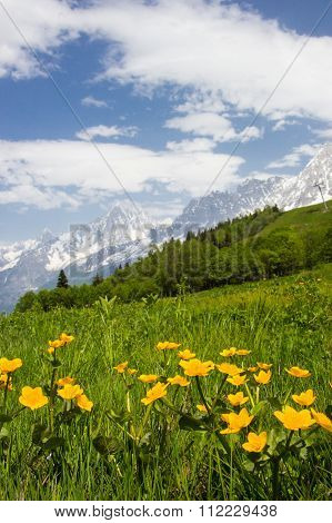 Meadow in French Alps