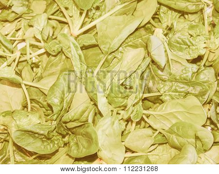 Retro Looking Spinach Leaves
