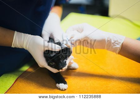 Vet Clinic - Wounded Cat