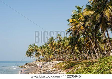 Palm Treet Varkala