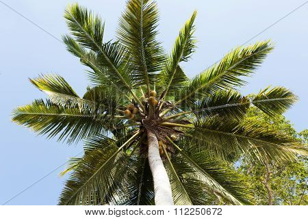 Coco-palm Tree Against Blue Sky