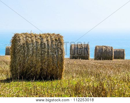 Straw hay bale on the field after harvest