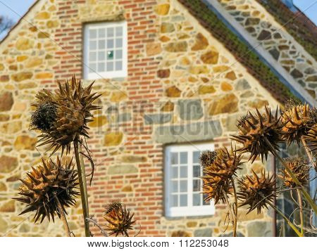 Dried Burdock plant and ancient house