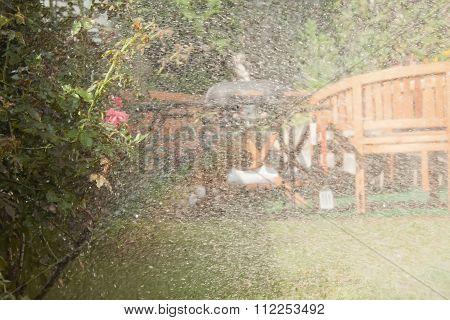 Sprinkler watering rose