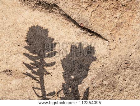 Flower shadow on stone