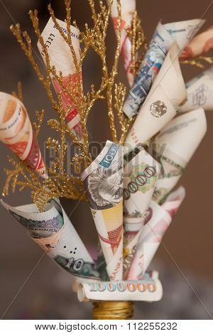 Money tree closeup