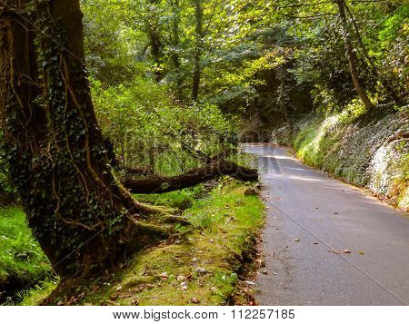 The road in the forest