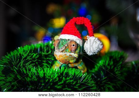 Chameleon  Santa Claus