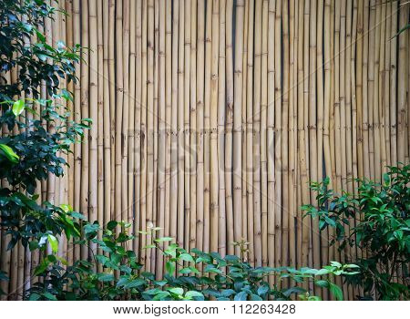 bamboo fence with green plant
