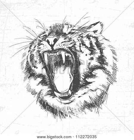 Tiger Head Silhouette - Vector Illustration Isolated On White Background. See Also Other Sets Of Ani