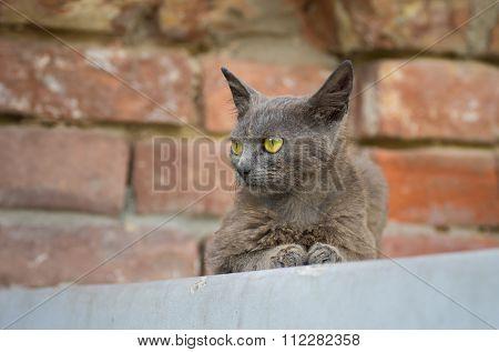 Beautiful alien cat sitting on a parapet