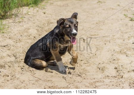 Adorable stray puppy having rest in a sandy place